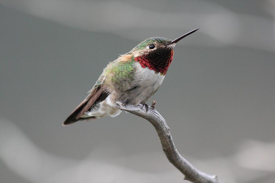 similiar hummingbird attachment keywords hummingbird phone cover hummingbird wiring diagram