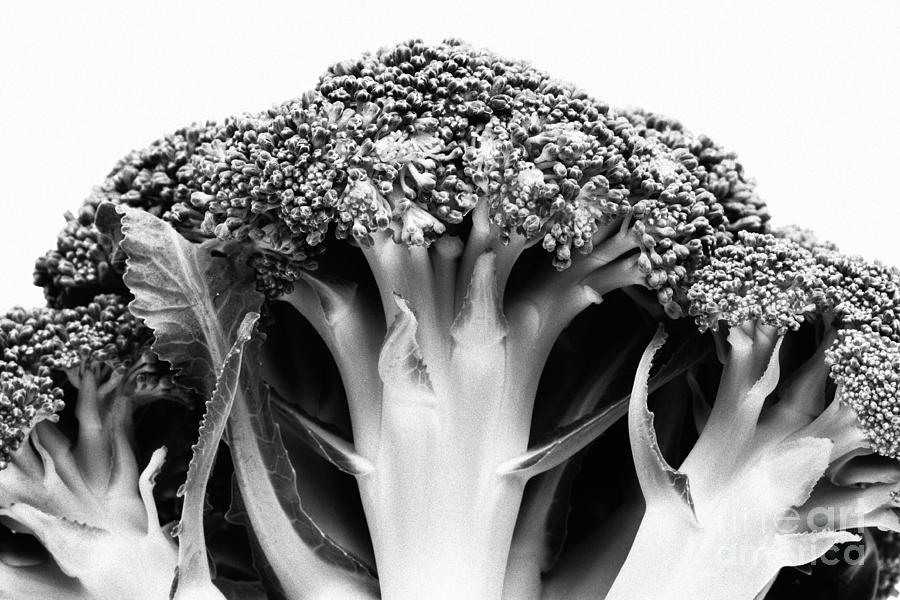 Broccoli On White Background Photograph