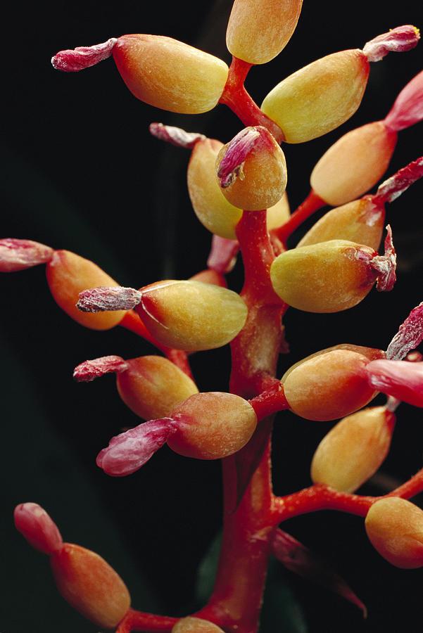 Bromeliad Detail Brazil Photograph