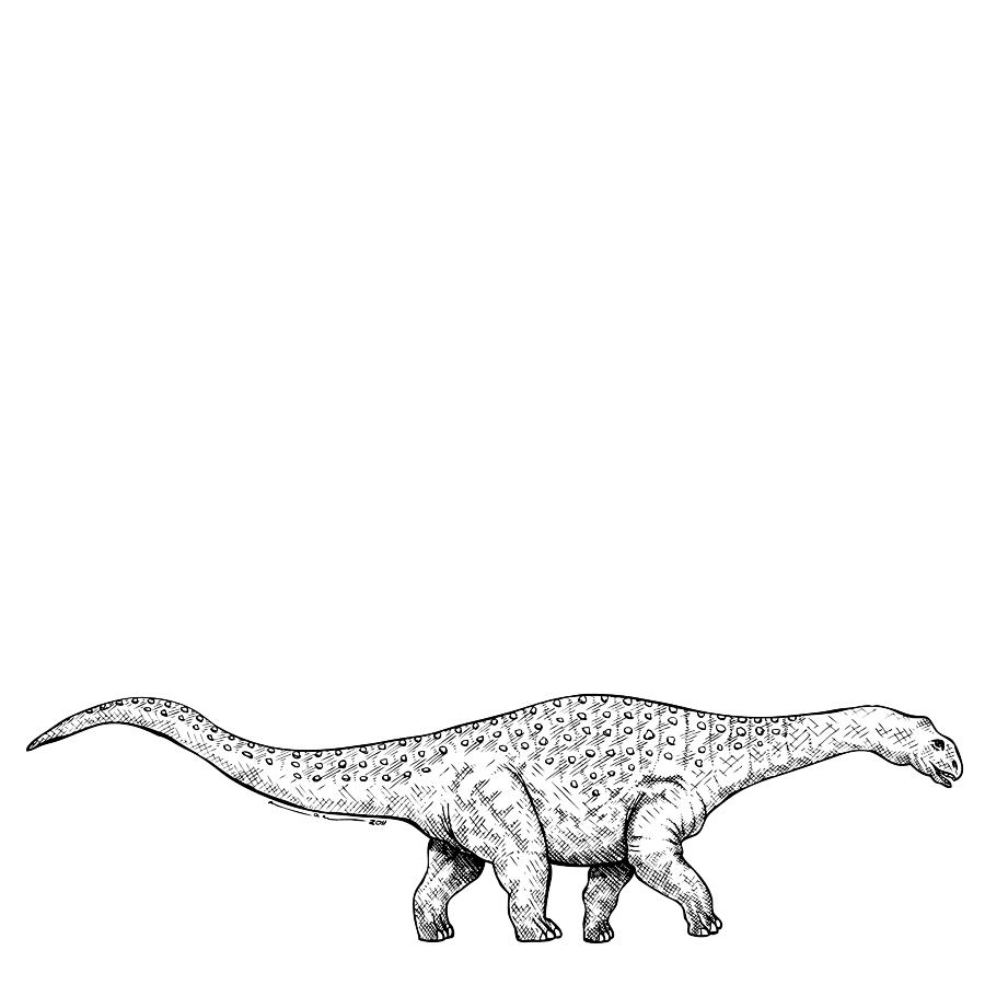 Brontonsaurs - Dinosaur Drawing