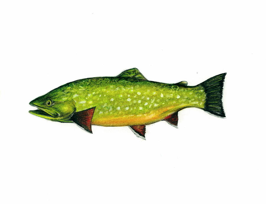 Brook Trout - Green Mixed Media