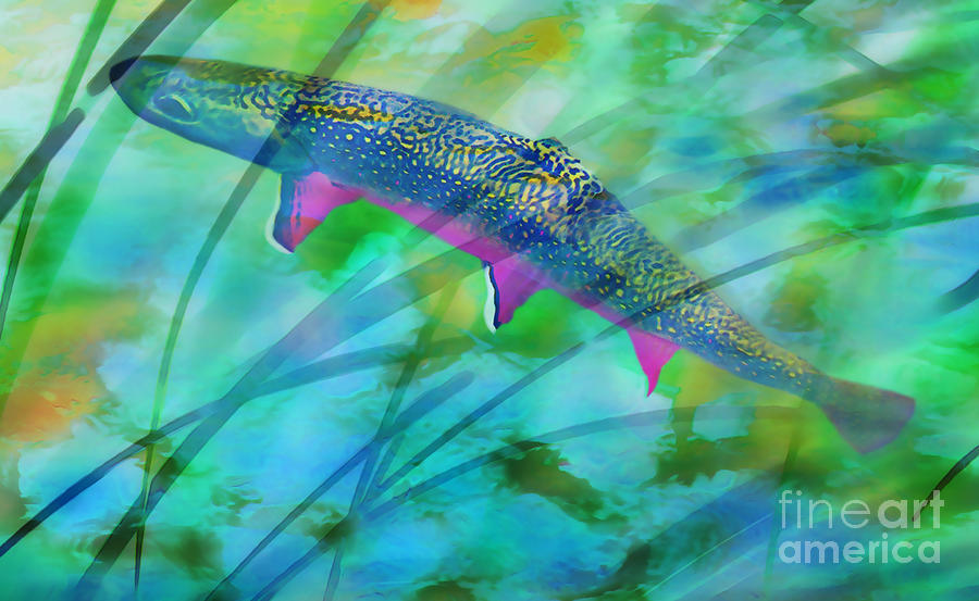 Brook Trout In The Stream Photograph  - Brook Trout In The Stream Fine Art Print