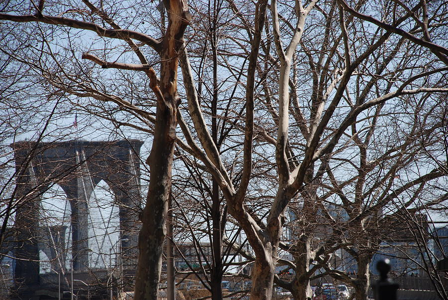 Brooklyn Bridge Thru The Trees Photograph