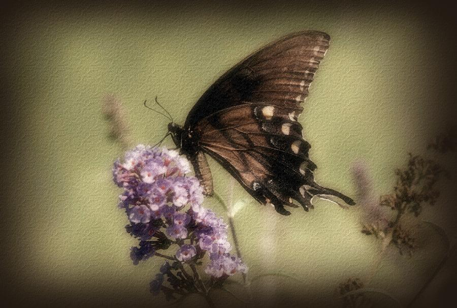 Brown And Beautiful Photograph  - Brown And Beautiful Fine Art Print