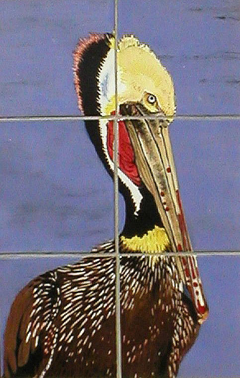 Brown Pelican Painting
