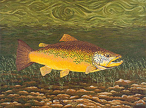 Brown Trout Fish Art Print Touch Down Brown Trophy Size Football Shape Brown Trout Angler Angling Painting