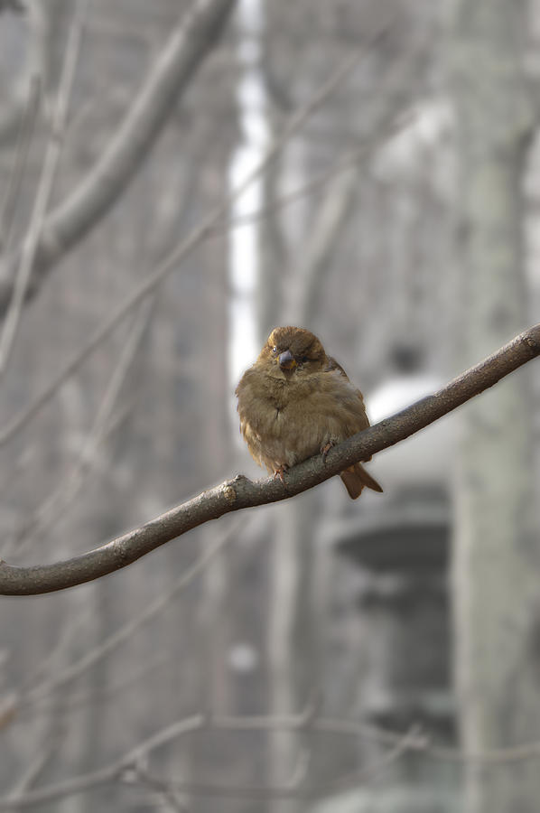 Bryant Park Bird Nyc Photograph  - Bryant Park Bird Nyc Fine Art Print