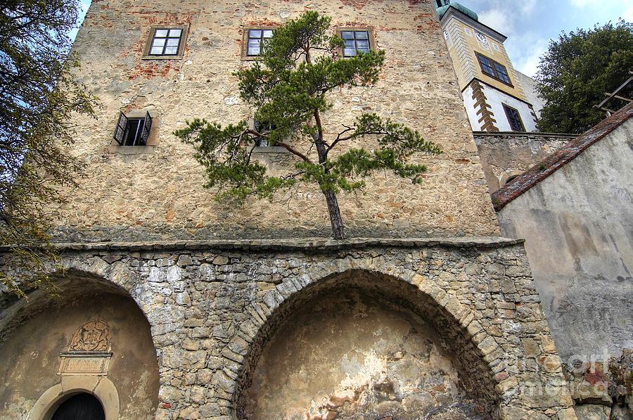 Buchlov Castle Photograph