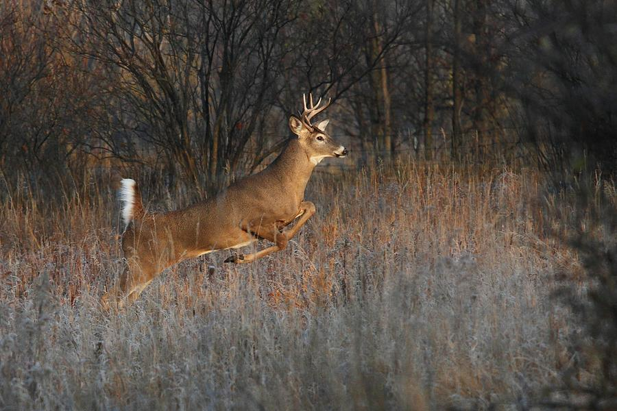 Buck On The Run Photograph  - Buck On The Run Fine Art Print