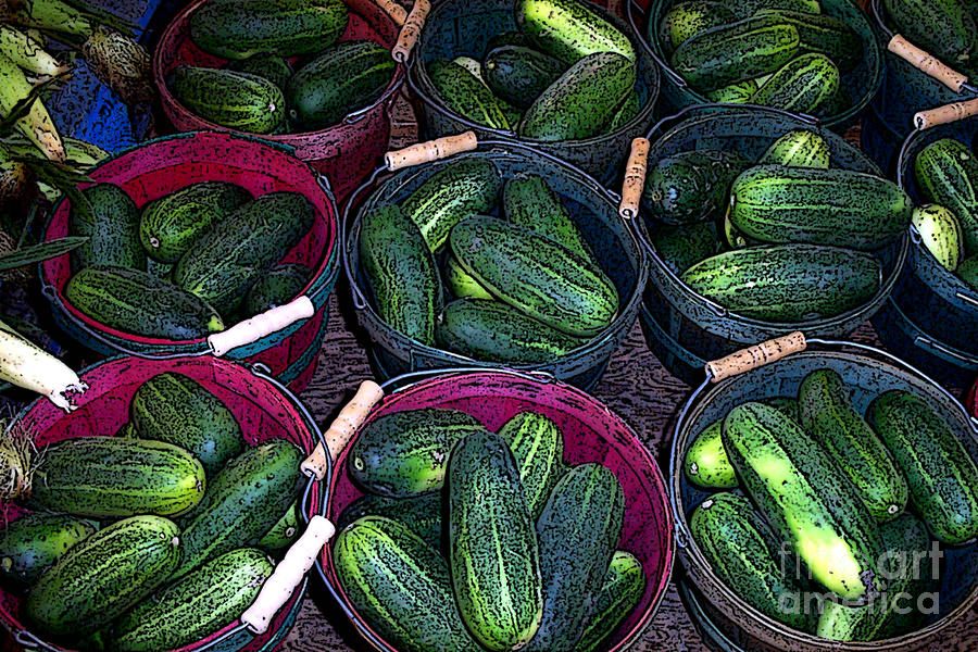 Buckets Of Cucumbers Photograph  - Buckets Of Cucumbers Fine Art Print