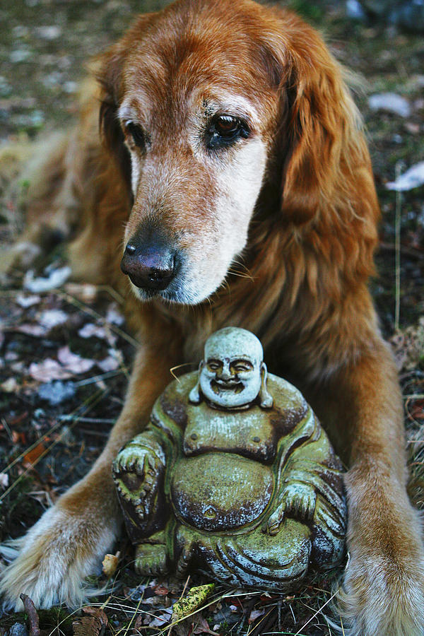 Dog Photograph - Buddha And The Old Boy by Lorraine Devon Wilke