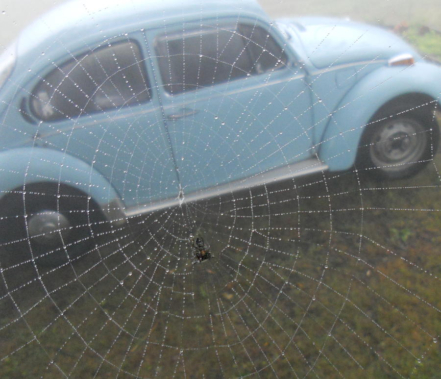 Bug In A Web Photograph