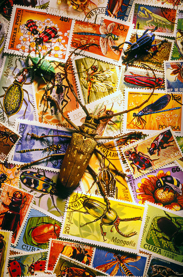 Bugs On Postage Stamps Photograph  - Bugs On Postage Stamps Fine Art Print
