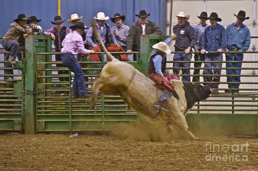 Photography Photograph - Bull Rider 2 by Sean Griffin