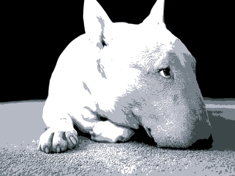 Bull Terrier White On Black Digital Art  - Bull Terrier White On Black Fine Art Print