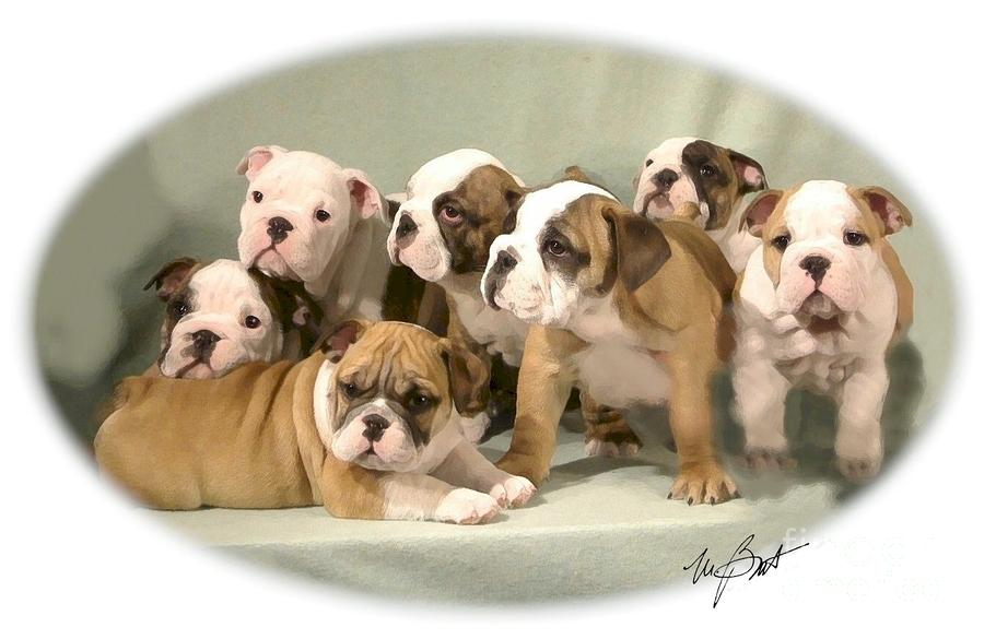 Bulldog Family Pups Digital Art  - Bulldog Family Pups Fine Art Print
