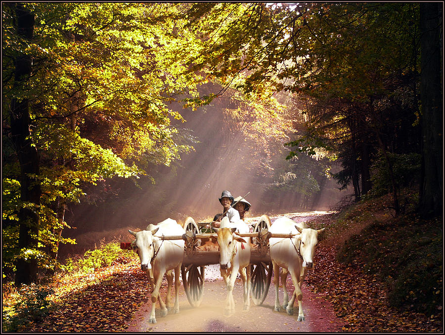 Bulls Pyrography - Bulls Ride by E  Kraizberg