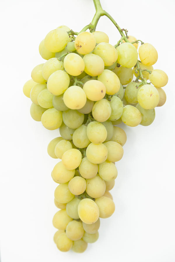 White Grapes Photograph - Bunch Of Grapes by Maj Seda
