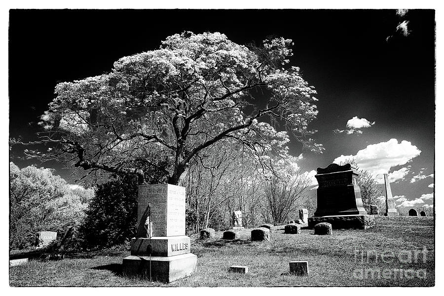 Bury Me Under A Tree Photograph