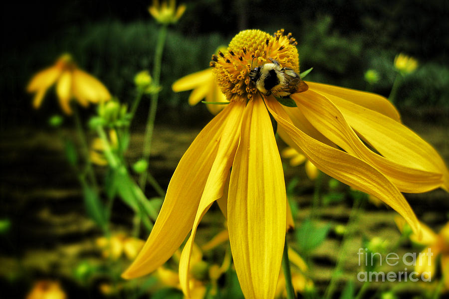 Busy Bee Photograph  - Busy Bee Fine Art Print
