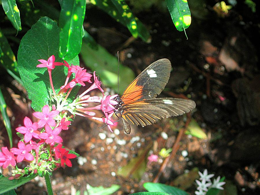 Buterfly Flowers And Green Photograph