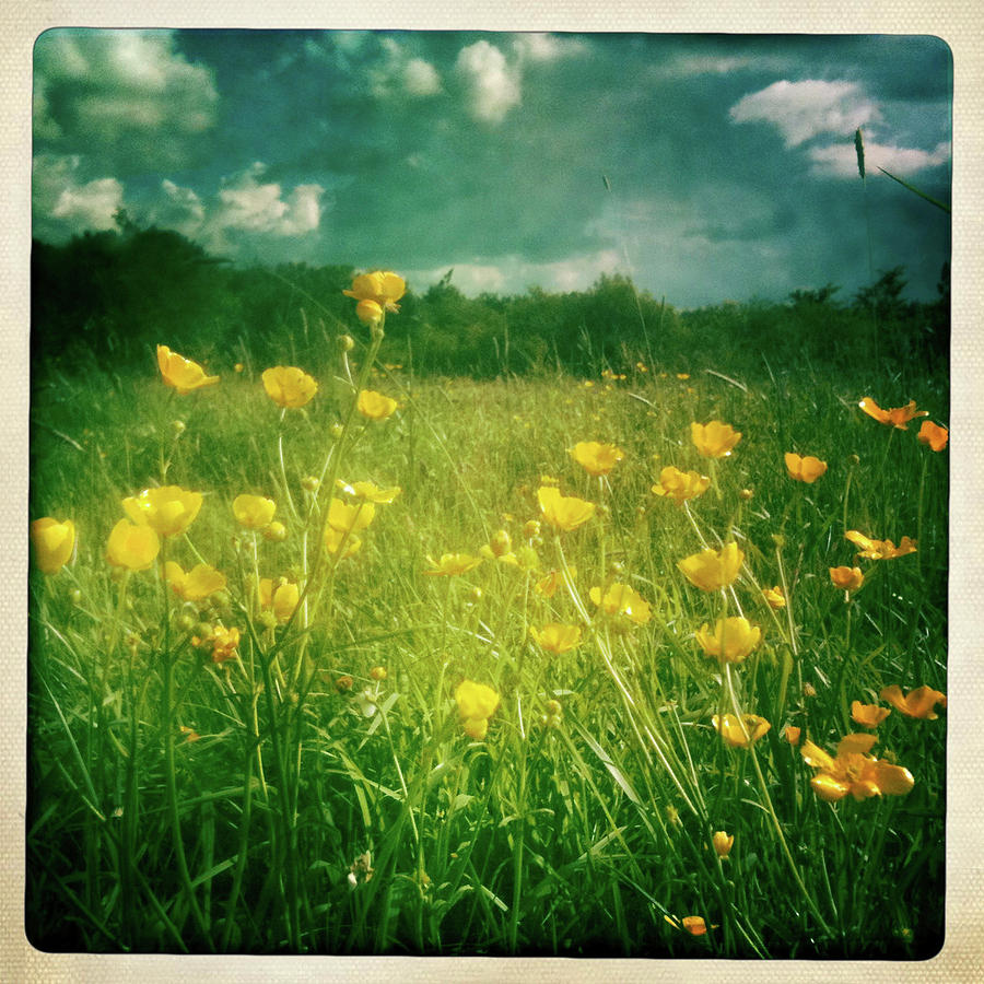 Square Photograph - Buttercups by Neil Carey Photography