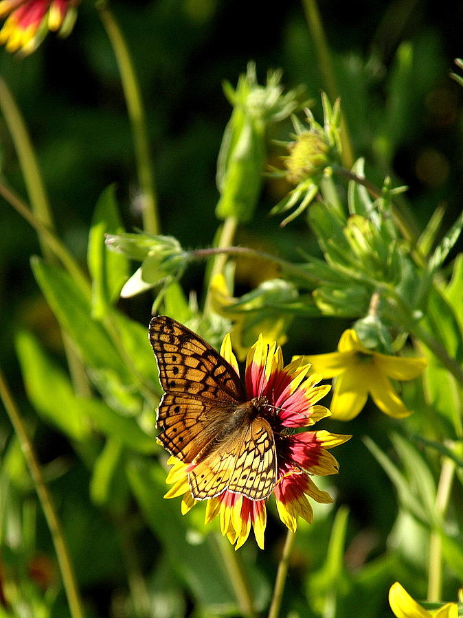 Butterfly Photograph - Butterfly And Blankets I by James Granberry
