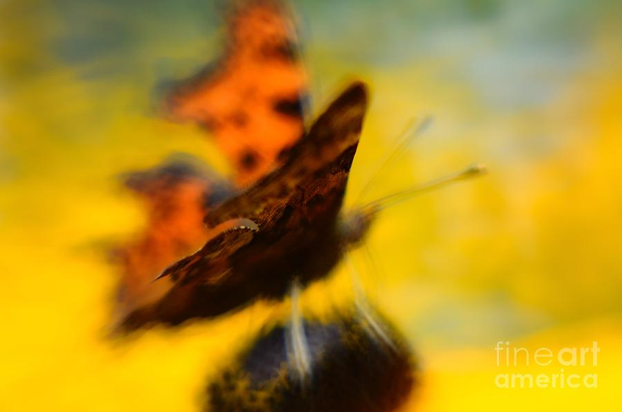 Butterfly Butterfly Photograph