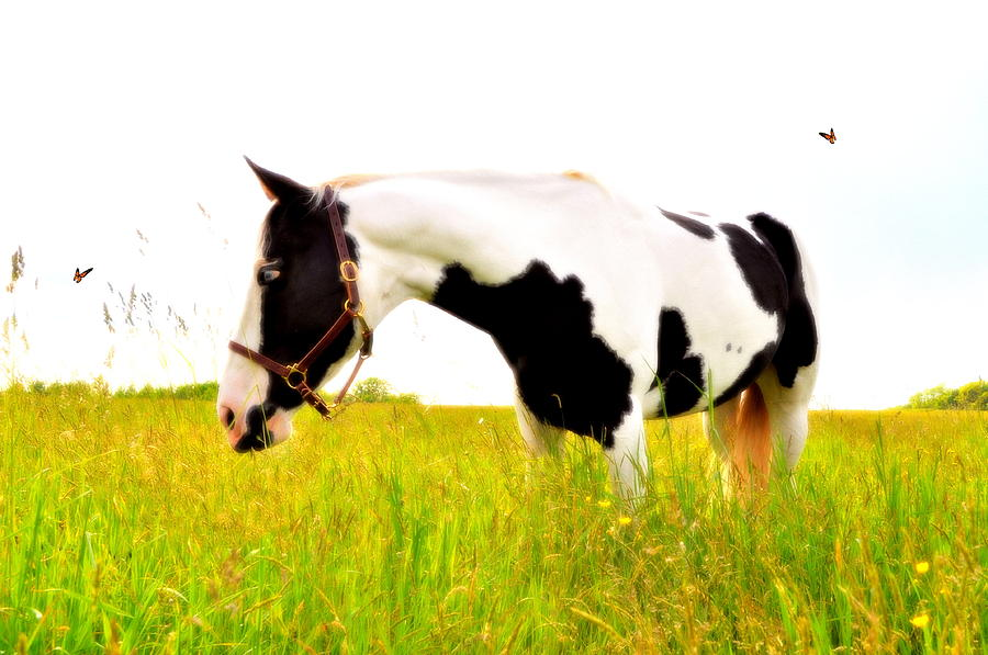 Horse Photograph - Butterfly Effect by Emily Stauring