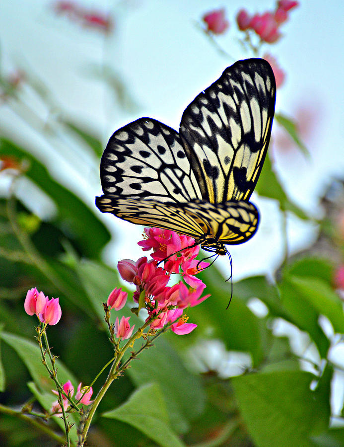 Butterfly Glow Photograph