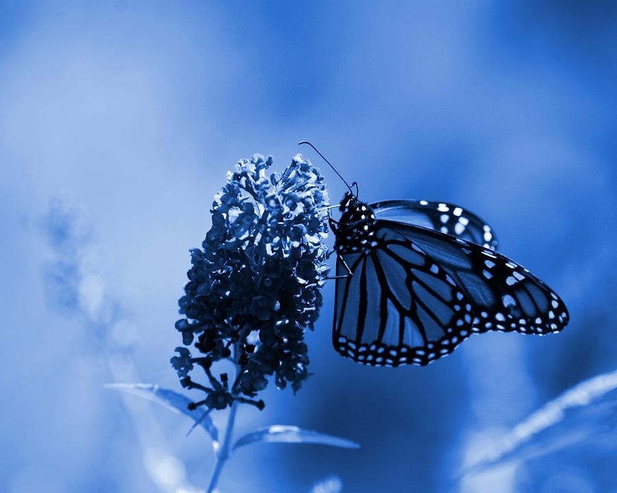 Butterfly In Blue Photograph - Butterfly In Blue by Angie Tirado