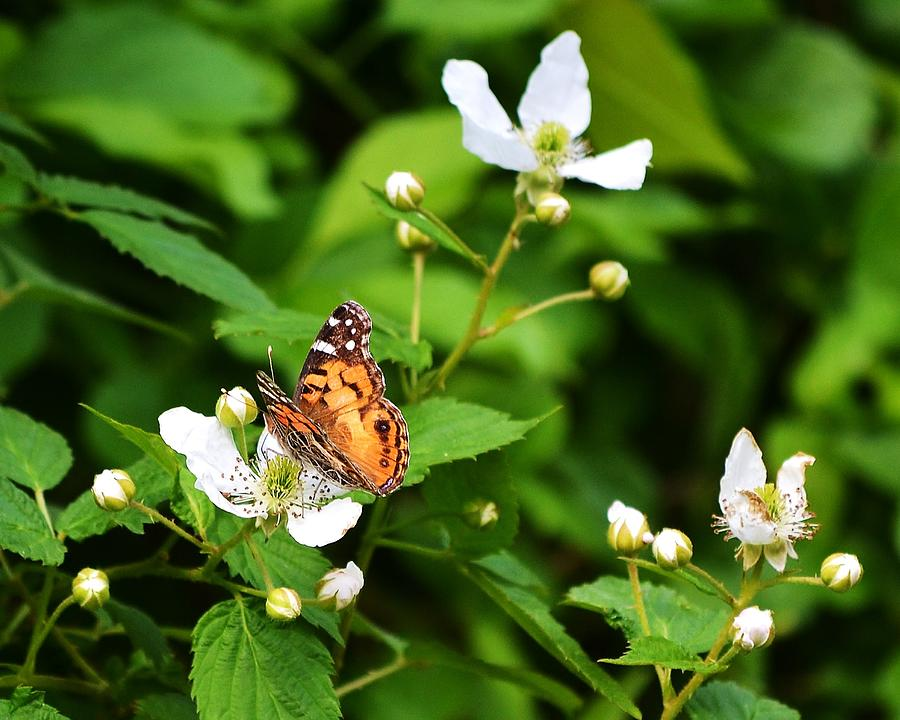 Butterfly Joy Photograph  - Butterfly Joy Fine Art Print