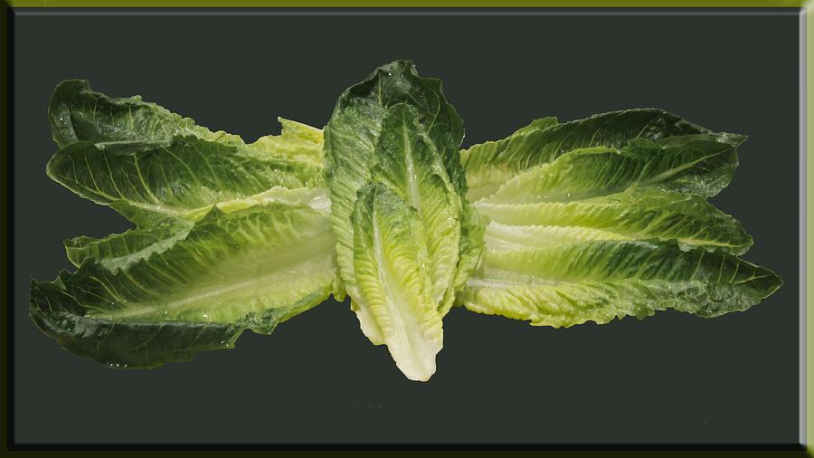 Butterfly Lettuce Photograph