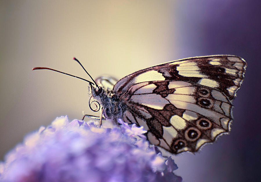 Image result for butterfly photography