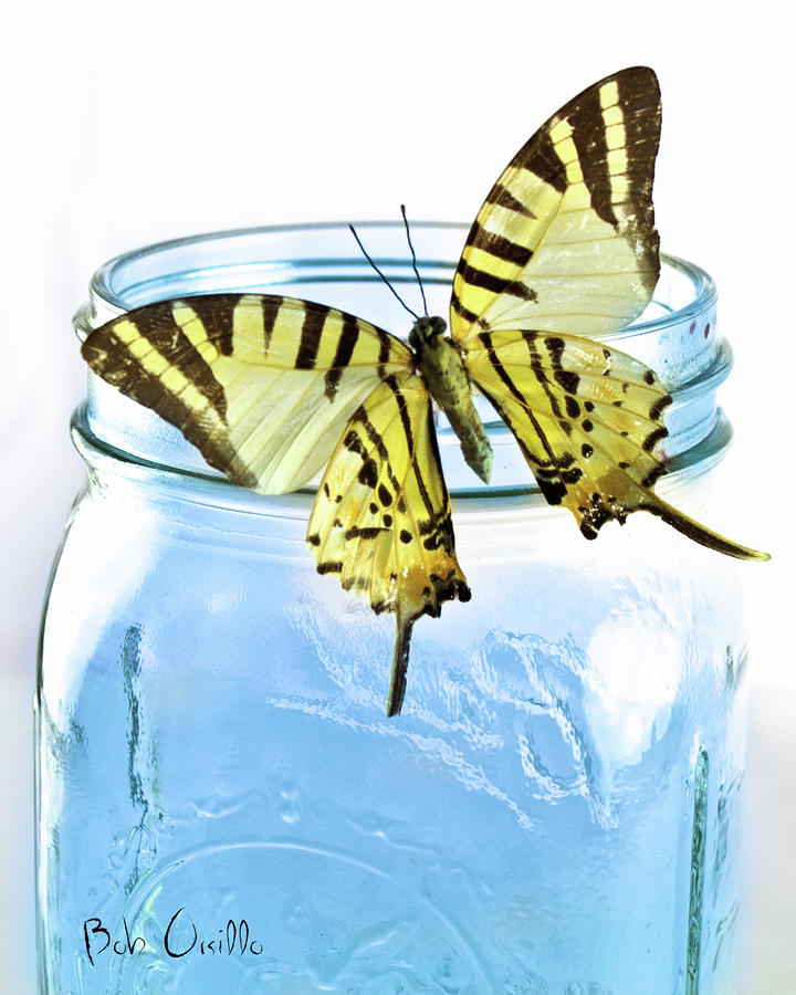 Butterfly On A Blue Jar Photograph  - Butterfly On A Blue Jar Fine Art Print