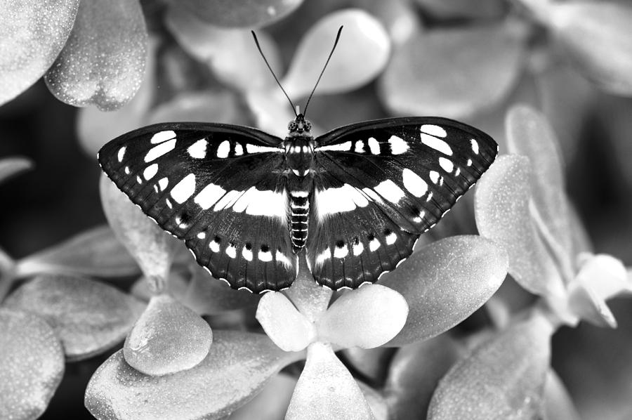 Butterfly Study #0061 Photograph