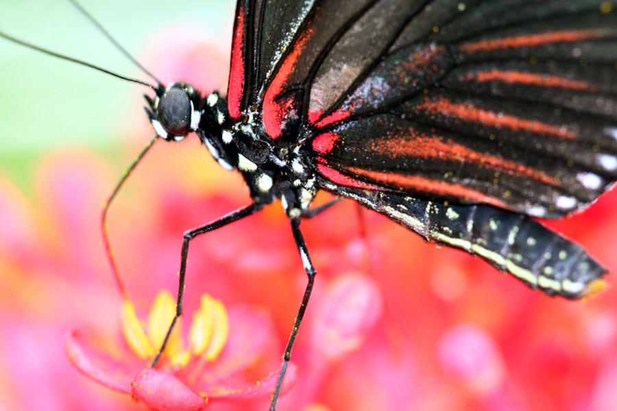 Butterfly Wings Photograph  - Butterfly Wings Fine Art Print