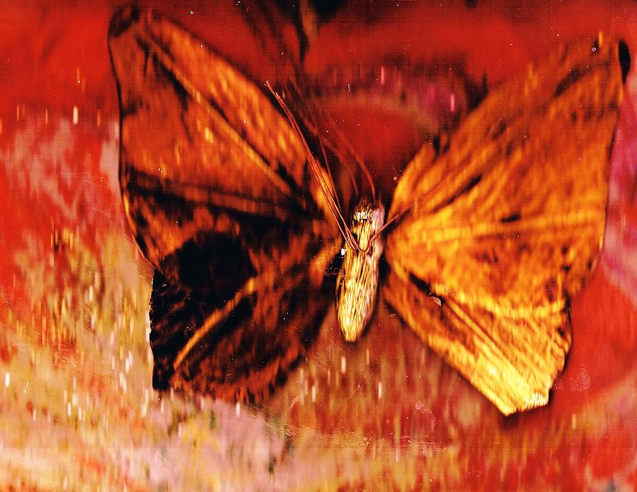 Butterfly With Dark Wing Painting