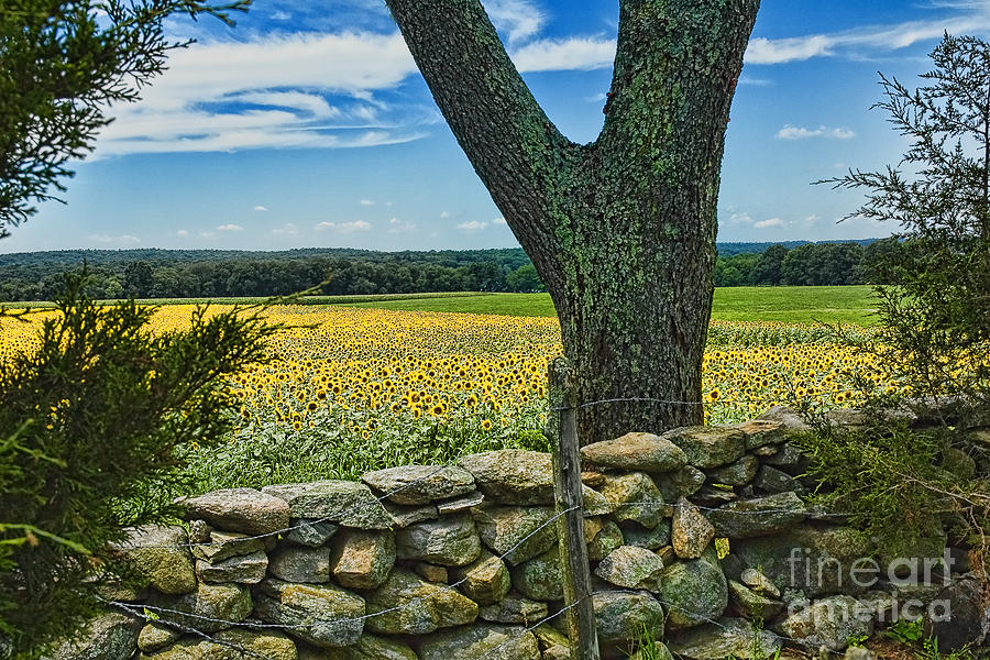 Buttonwood Farm Photograph  - Buttonwood Farm Fine Art Print