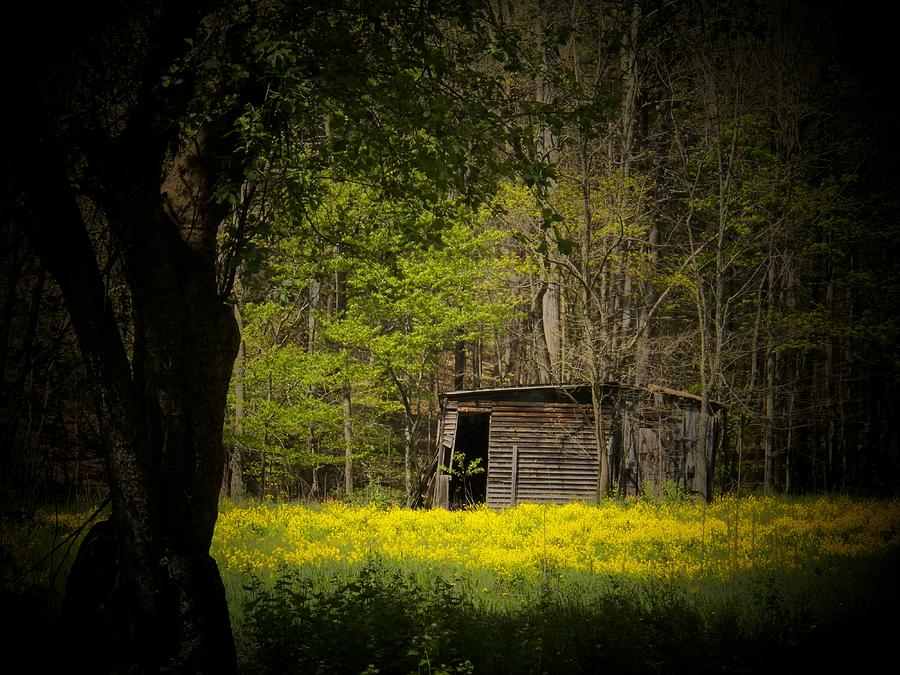 Cabin In The Flowers Photograph
