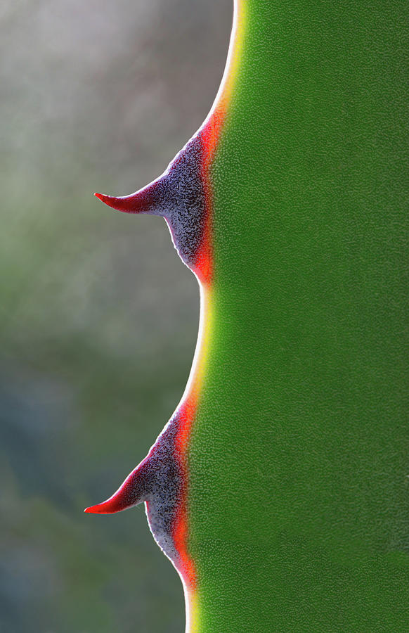 Vertical Photograph - Cactus by Patricia Fenn Gallery