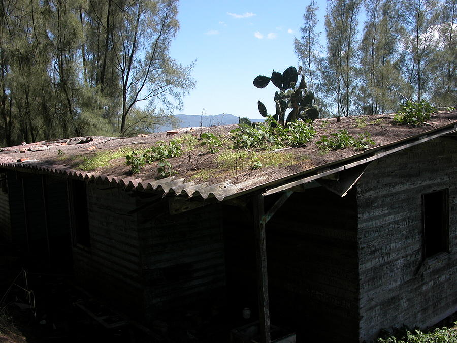 Cactus Shed Photograph