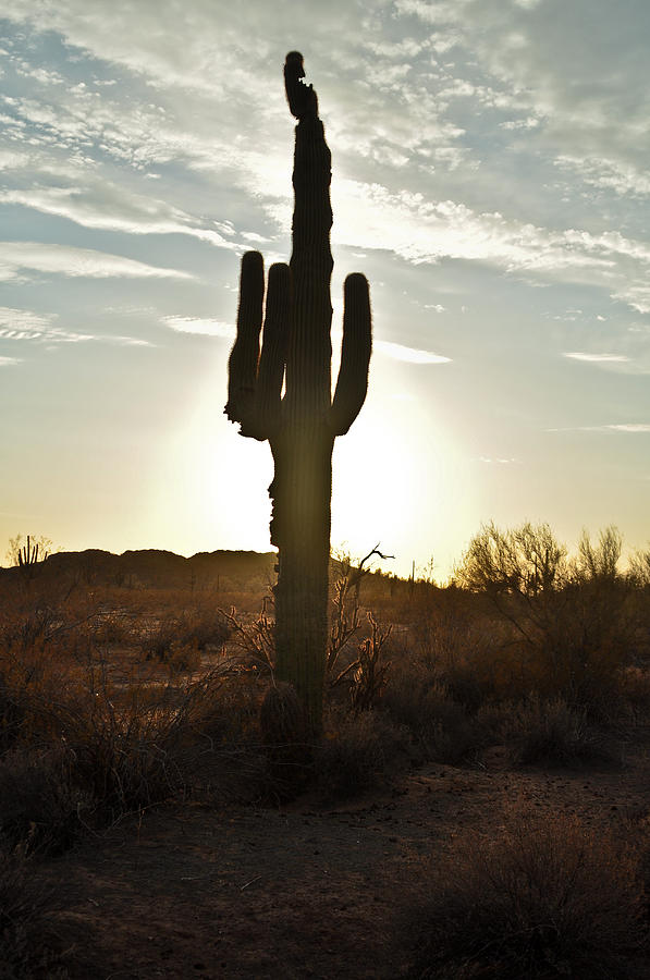 Cactus Sunset Photograph  - Cactus Sunset Fine Art Print