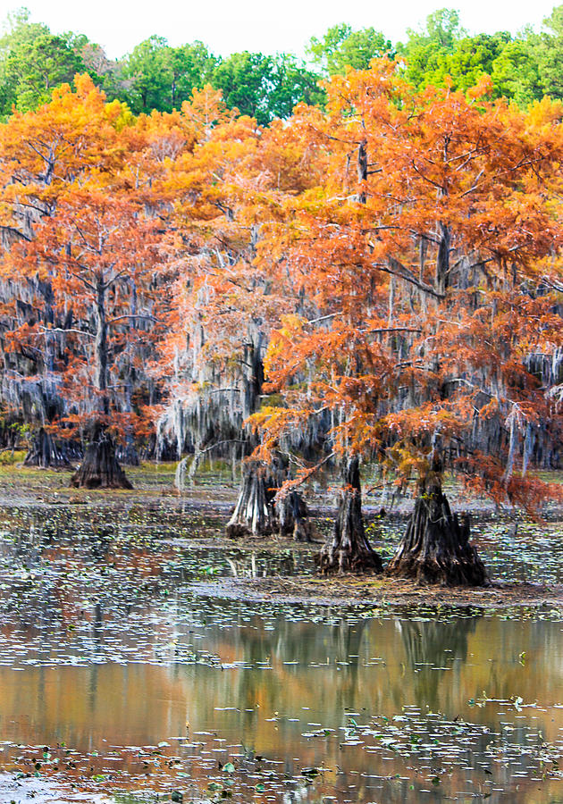 Caddo Lake State Park Photograph  - Caddo Lake State Park Fine Art Print