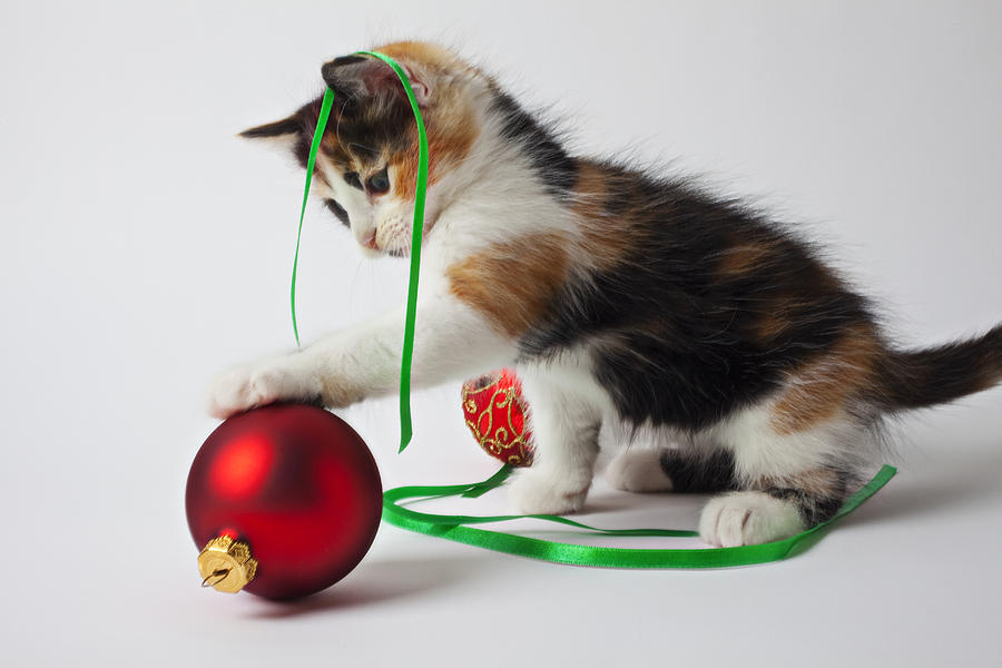 Calico Kitten And Christmas Ornaments Photograph