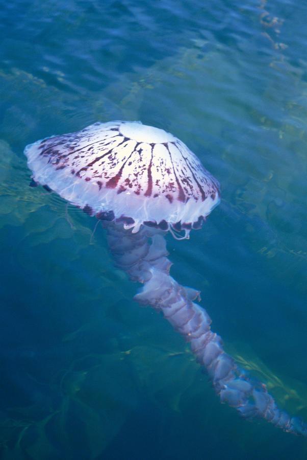 California Marine Life Photograph