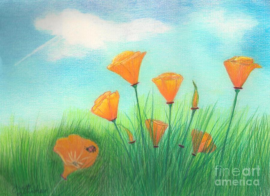 California Poppies Drawing  - California Poppies Fine Art Print