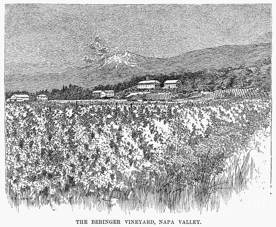 1889 Photograph - California: Vineyard, 1889 by Granger
