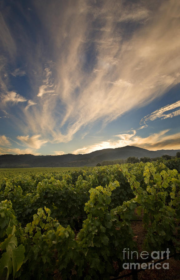 California Vineyard Sunset Photograph