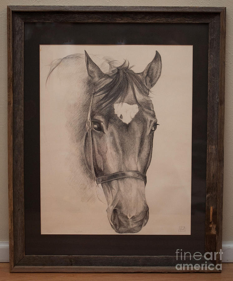 Horse Drawing - Calista by Becka Noel